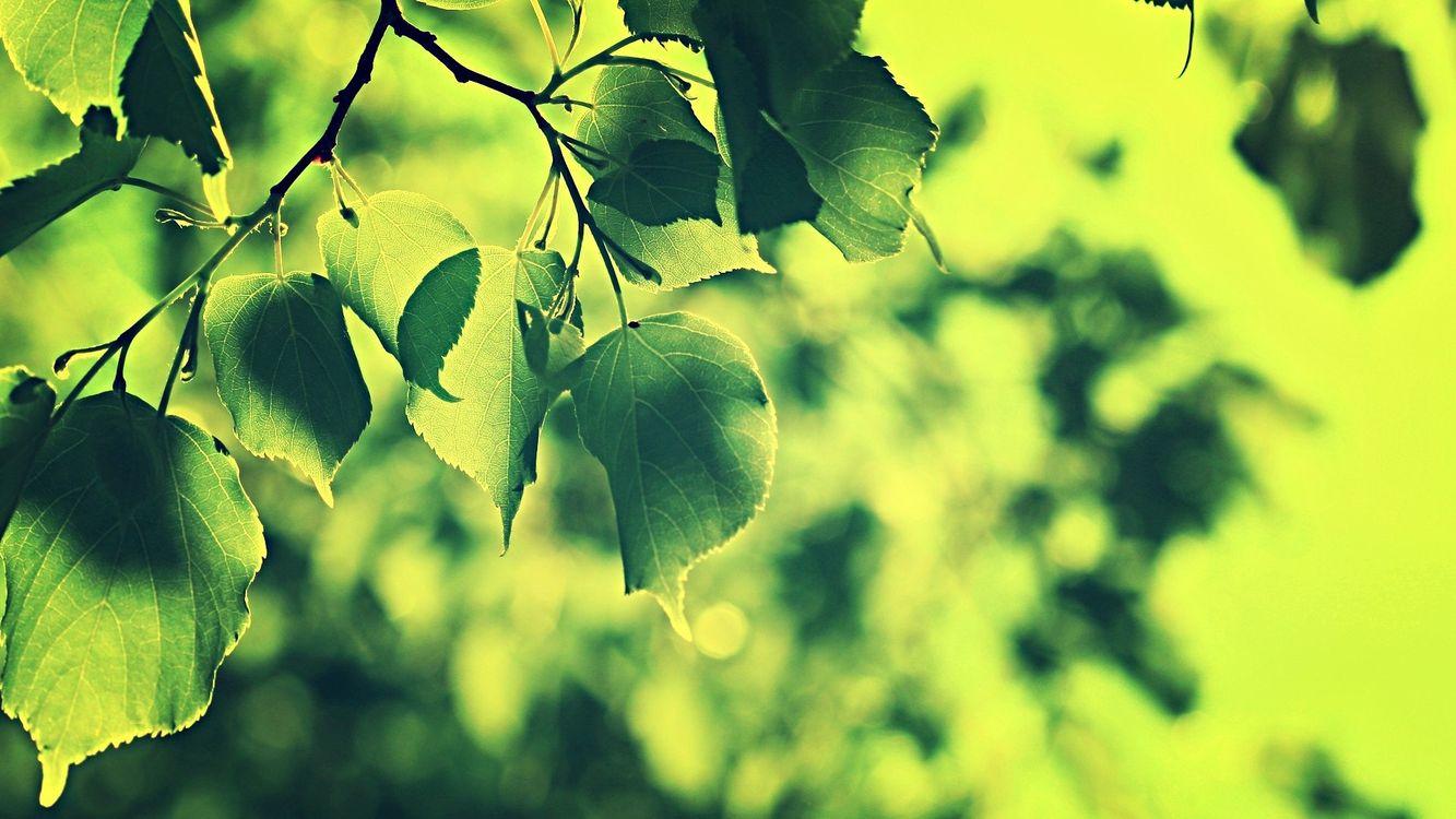 Фото бесплатно природа, листья, растения, ветка, зеленый, природа - скачать на рабочий стол