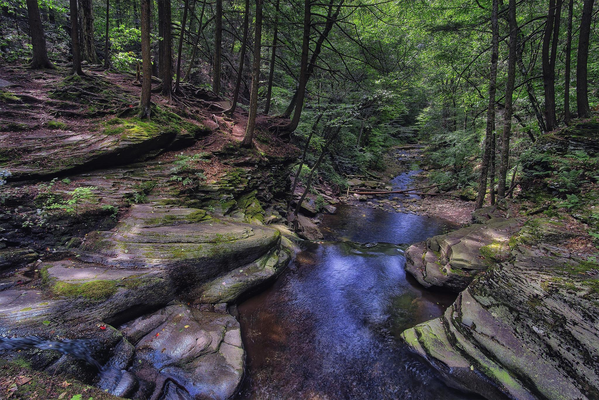 Обои Ricketts Glen State Park, Pennsylvania, Риккетс Глен Стейт Парк, лес