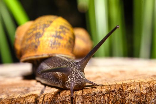 Photo free insect, snail, shell