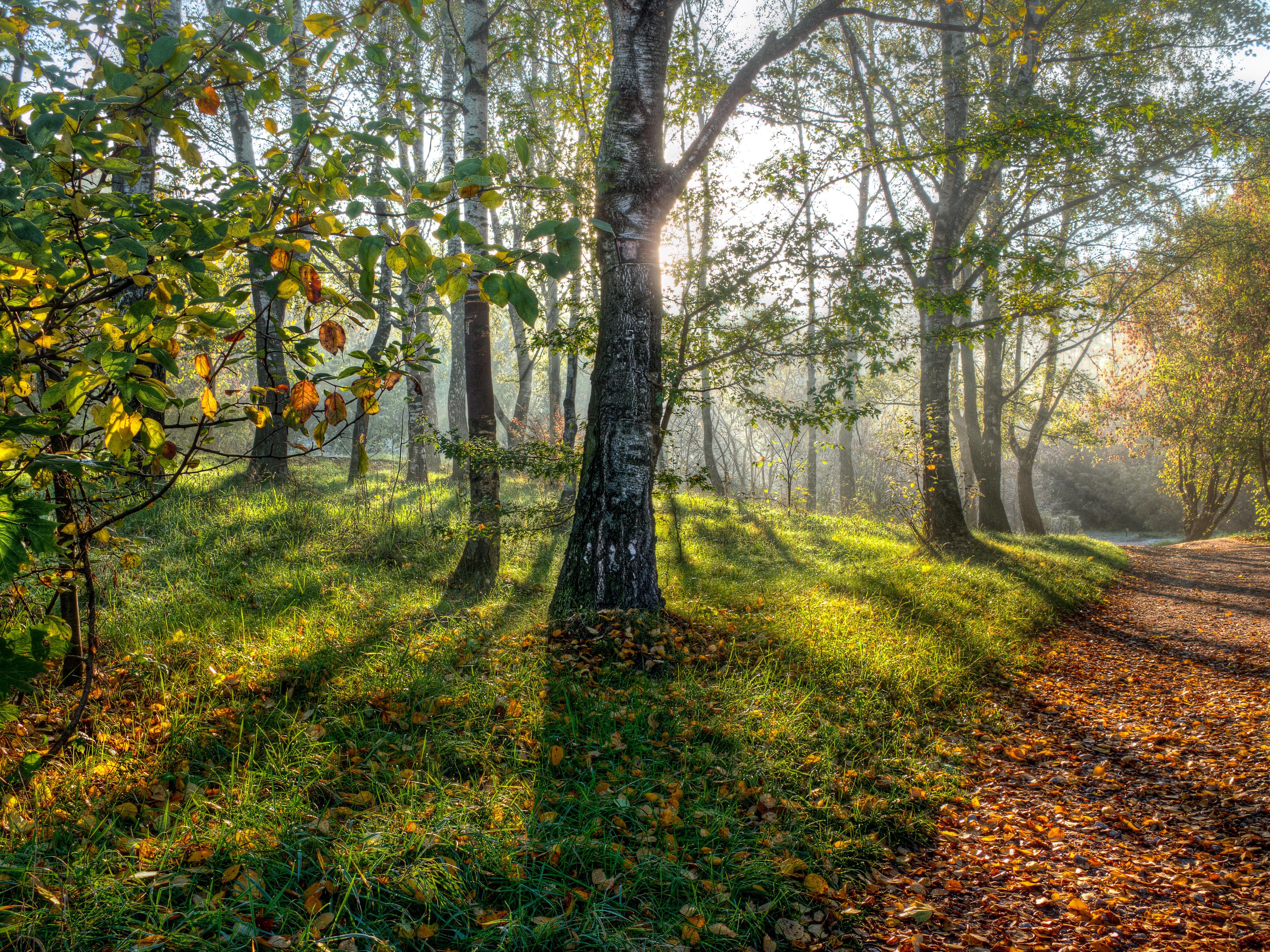деревья парк осень роща  № 3186126  скачать