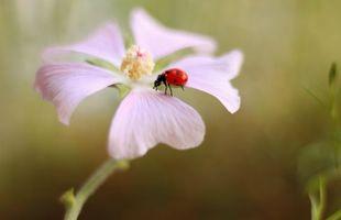 Бесплатные фото божья коровка, цветок, насекомое, макро