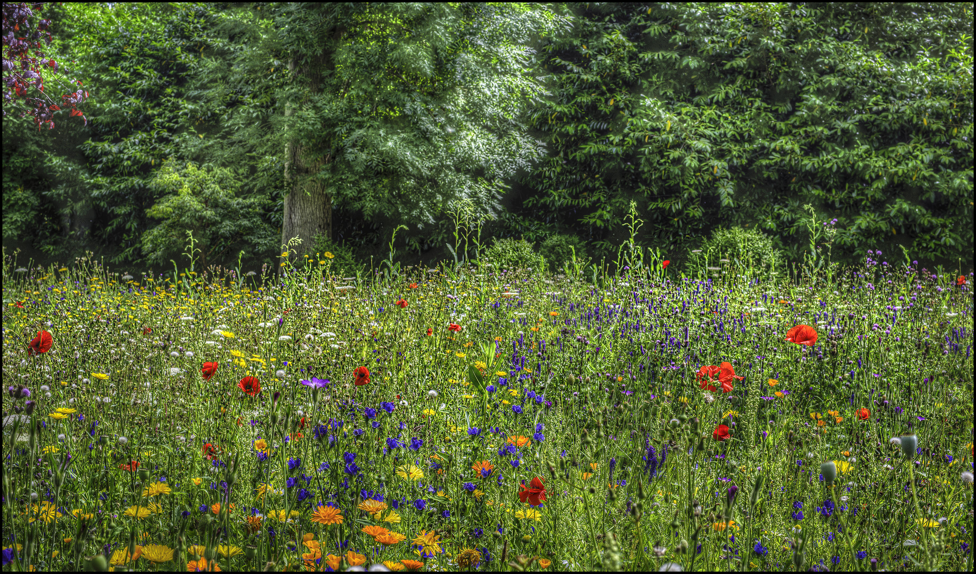 Обои лес, деревья, поле, цветы