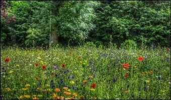 Бесплатные фото лес,деревья,поле,цветы