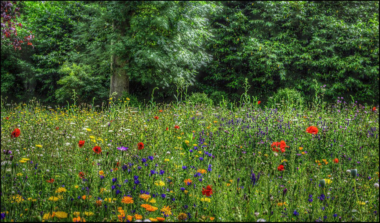 Фото бесплатно лес, деревья, поле, цветы, природа