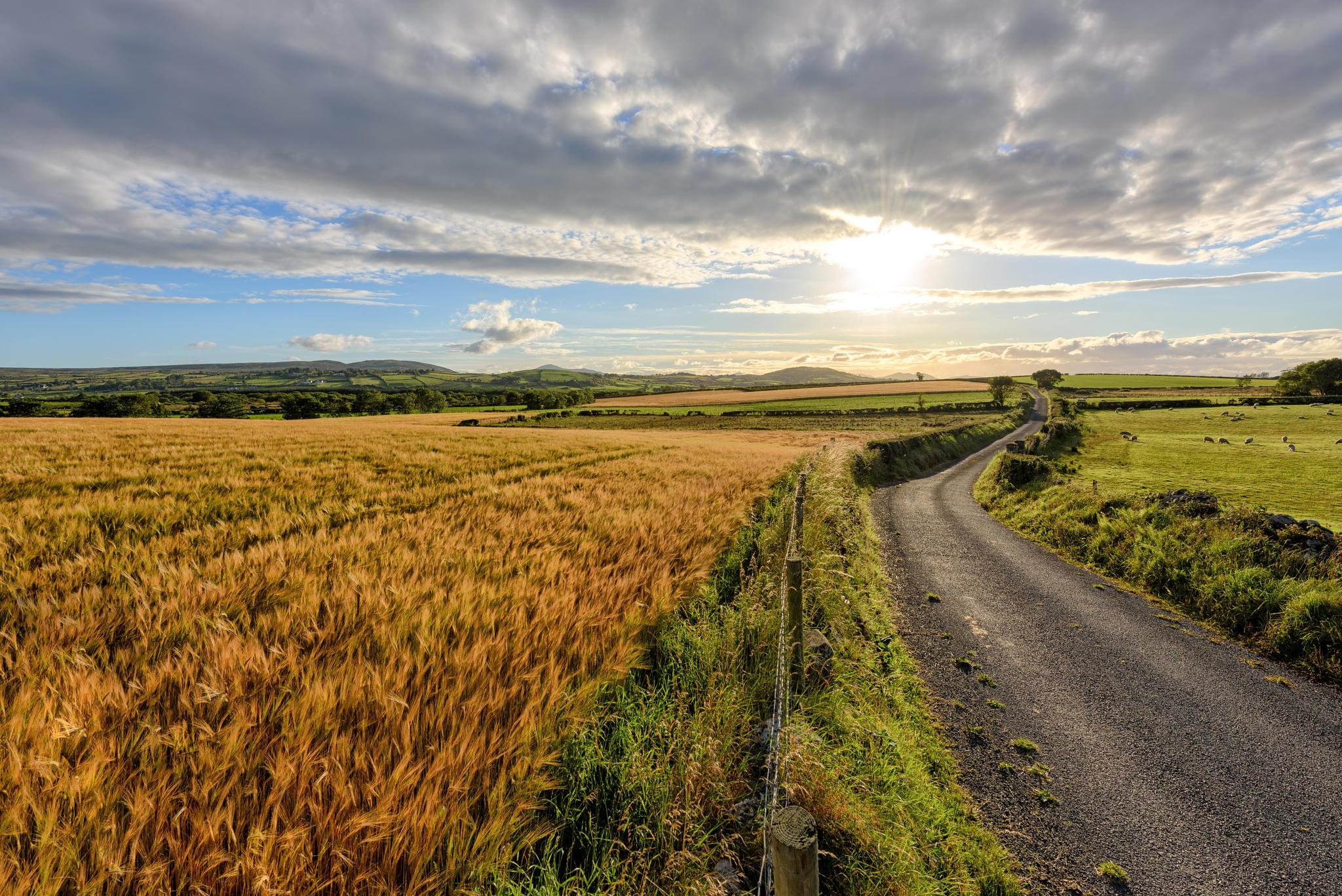 Обои Инишовен, Донегал, Ирландия, поле
