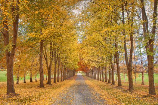 Фото бесплатно осень, аллея, дорога