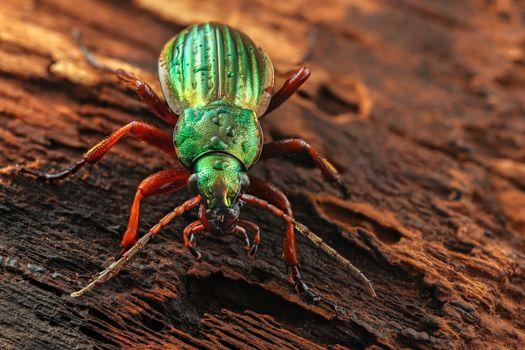 Фото бесплатно жук, зеленый, насекомые