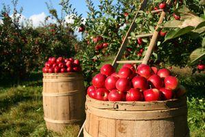 Фото бесплатно яблоневый сад, искусственный объект, сезон