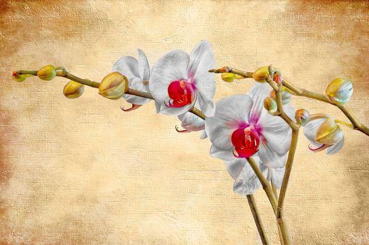 Бесплатные фото цветок,орхидея,фон,art