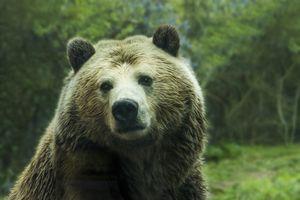 Фото бесплатно мех, дикая местность, бурый медведь