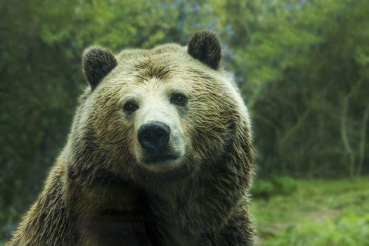 Photo free fur, wilderness, brown bear