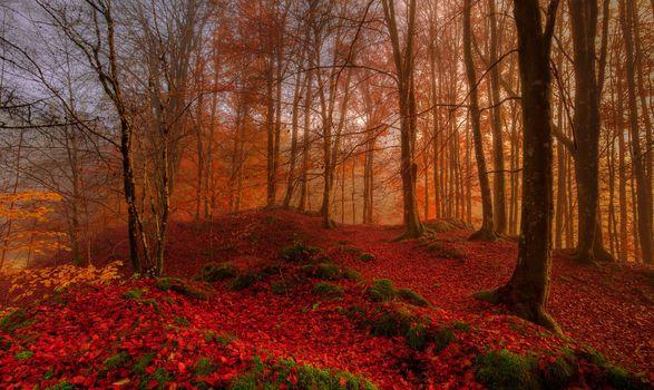 Photo free autumn, autumn forest, autumn leaves