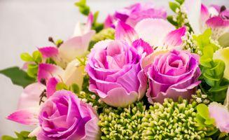 Бесплатные фото роза,букет,красочный,розы,цветок,цветы,цветочный