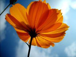 Фото бесплатно растение, стебель растения, крупным планом