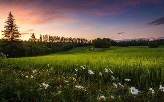 Бесплатные фото закат, поле, трава, цветы, ромашки, деревья, пейзаж