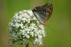 Фото бесплатно животное, насекомые, бабочка