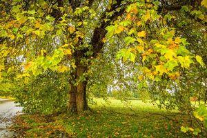 Фото бесплатно осень, поляна, дорога, дерево, листья, пейзаж