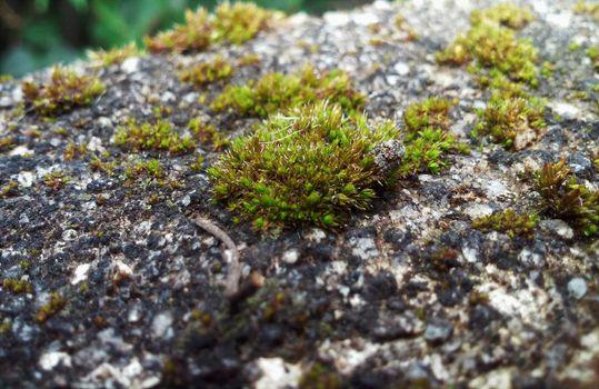 Фото бесплатно мох, камень, водоросли