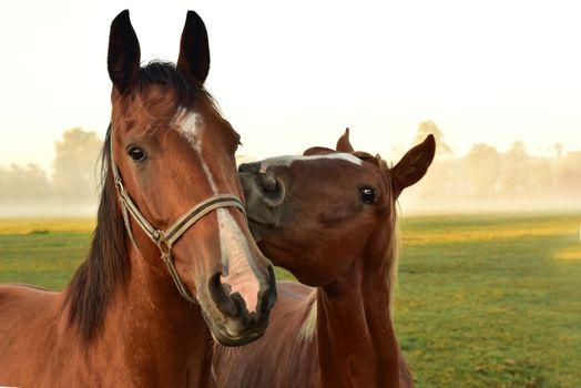 Photo free animals, horses, head