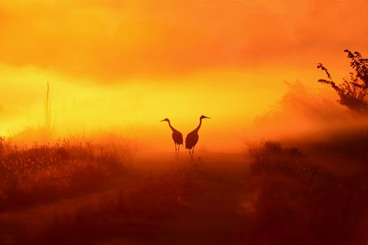 Photo free two birds, silhouette, sunset