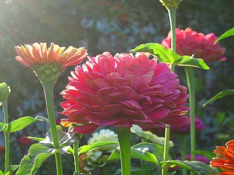 Фото бесплатно цветы, сад, лето
