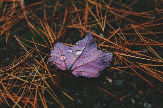 Фото бесплатно лист, капли, осень