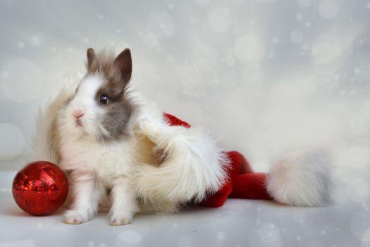 кролик,новый год,мяч,rabbit,new year