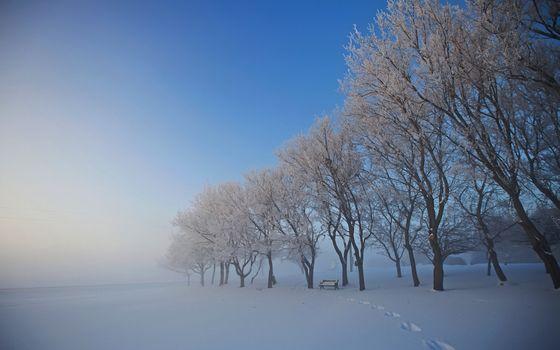 Photo free trees, winter, bench
