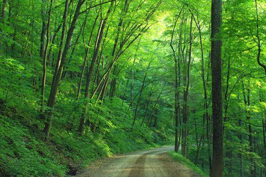 Фото бесплатно трава, дорога, кустарники