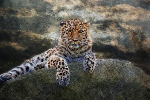Photo free leopard, predator, cat