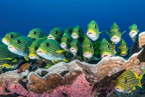 Заставки море, рыба, индонезия