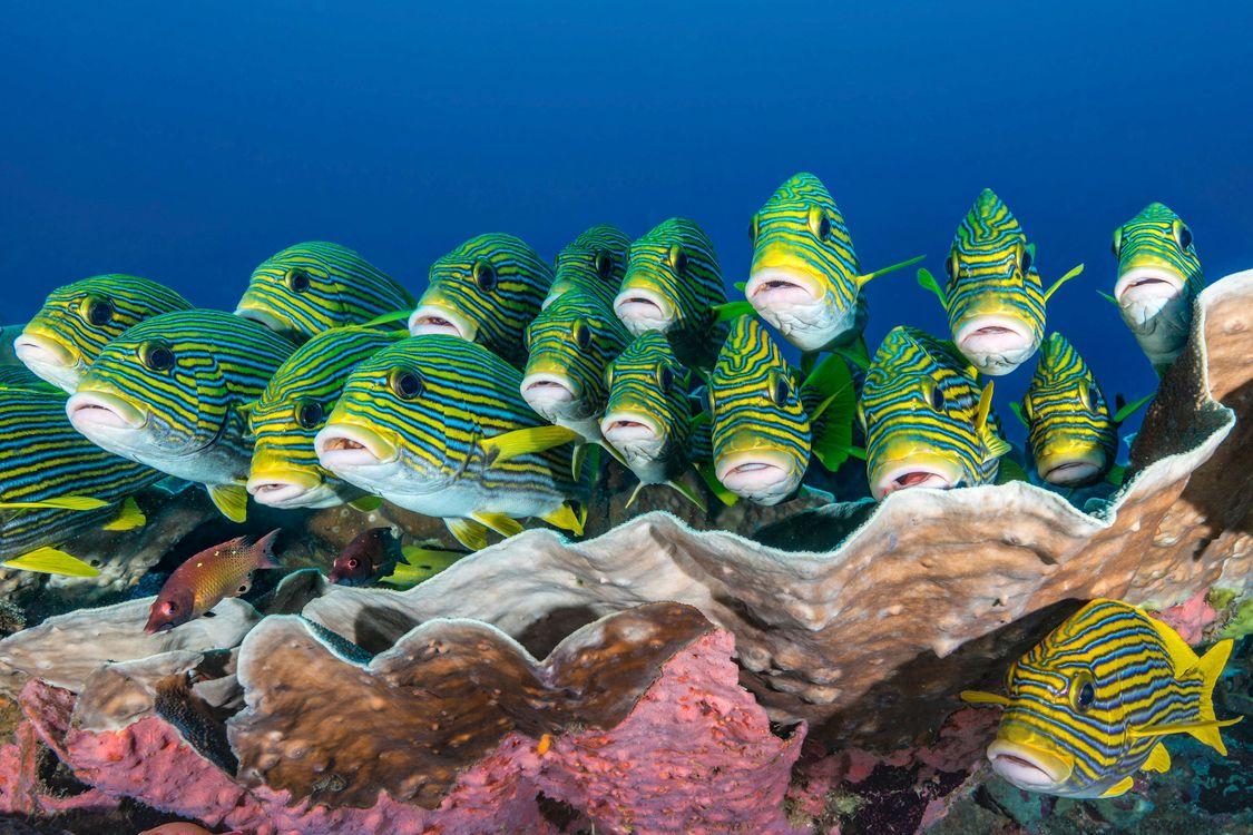 Фото бесплатно море, рыба, индонезия - на рабочий стол
