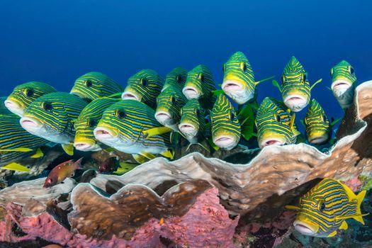 Фото бесплатно море, рыба, индонезия