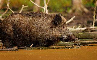 Фото бесплатно природа, дикая природа, грязь