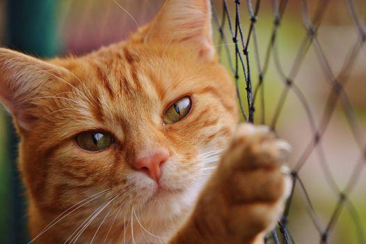 Фото бесплатно животное, милая, питомец