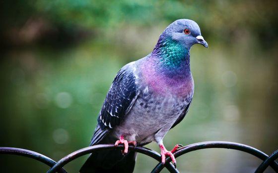 Фото бесплатно птицы, животные, глубина резкости