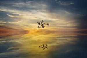 Заставки закат, стая птиц, море облаков