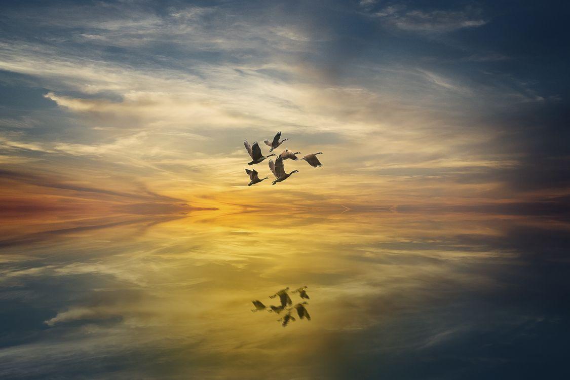 Фото бесплатно закат, стая птиц, море облаков - на рабочий стол