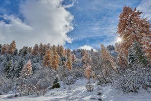 Бесплатные фото зима,закат,деревья,Швейцария,пейзаж