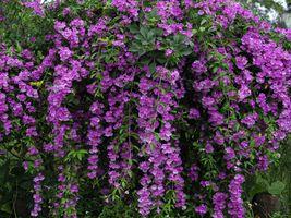 Фото бесплатно азалия, кустарник, цветы