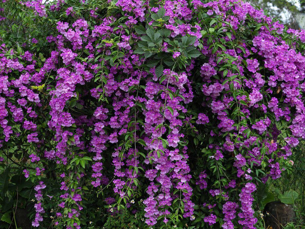 Photos for free azalea, bush, flowers - to the desktop