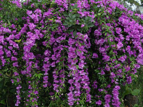 Photo free azalea, bush, flowers