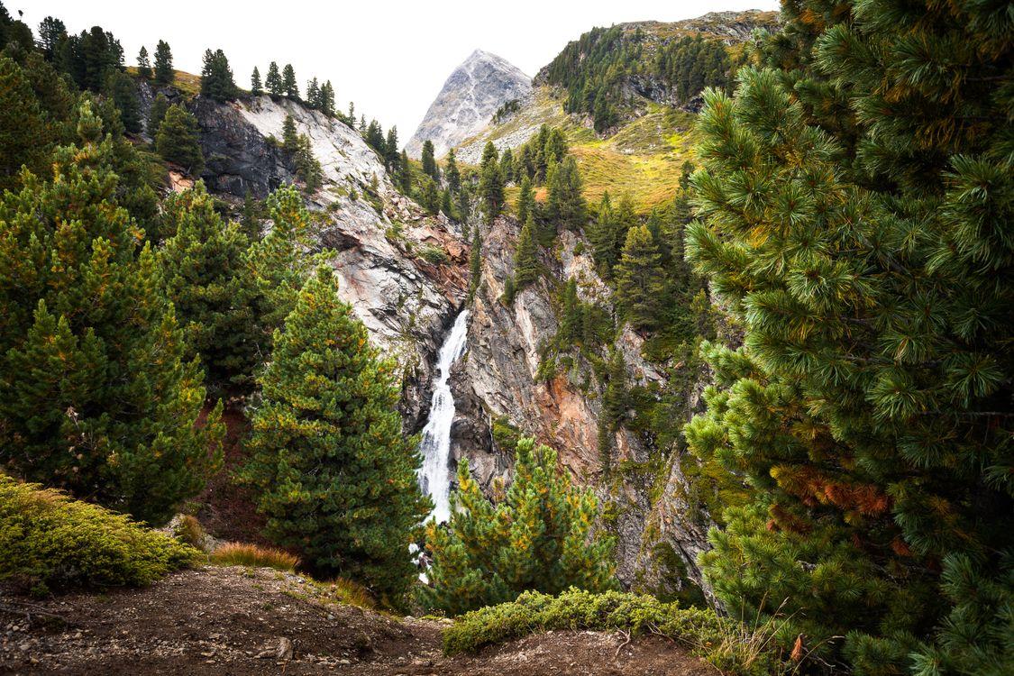 Фото природа Австрия ель - бесплатные картинки на Fonwall