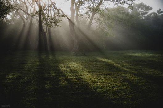 Photo free sunbeam, grass, forest