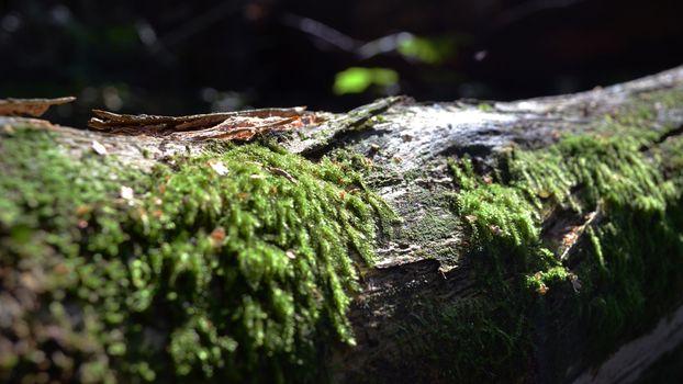 Фото бесплатно древесина, мох, фотографии