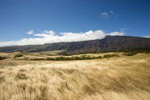 Фото бесплатно луг, степь, экосистема