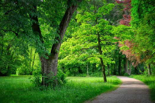 Красивые обои парк, деревья