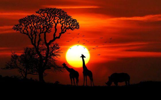 Photo free sunset, giraffe, rhinoceros