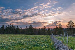 Фото бесплатно цветы, закат, деревья