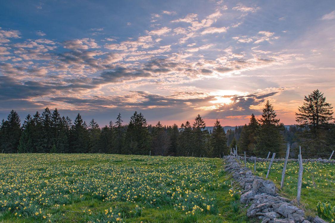 Обои закат, поле, деревья, цветы, пейзаж на телефон   картинки пейзажи